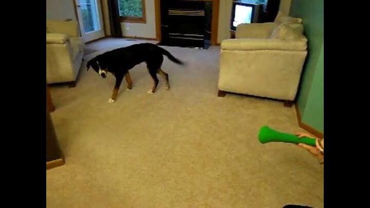 Vuvuzela Dog Poop